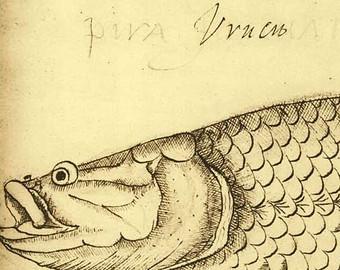 Illustrating Fish